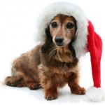Cute Christmas Outfits For Your Dog!